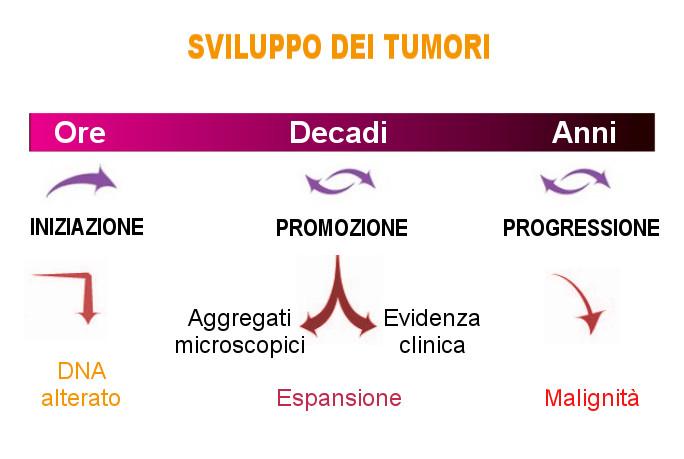 MFO Sviluppo dei tumori dopo alterazione dei geni