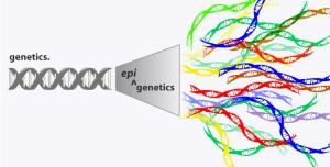pluralita-epigenetica