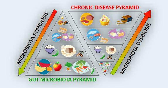 microbiota-grafico