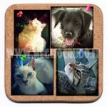 Animali da compagnia e scelta vegana – i gatti